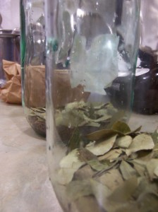 Coca Leaves and Kola Nuts