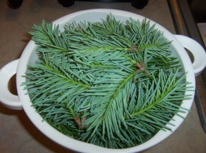 about a half gallon of fresh spruce tips, gathered a bit later in the year than the previous batch
