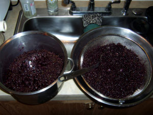 Thawed Elderberries. Freezing them helps break apart the skins and release the juice.